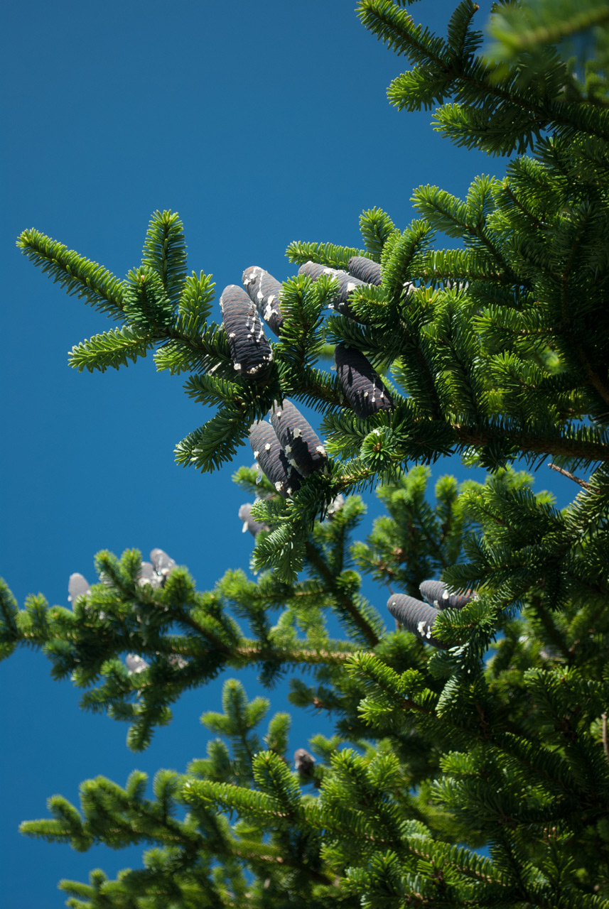 Photo: The Gray Cones