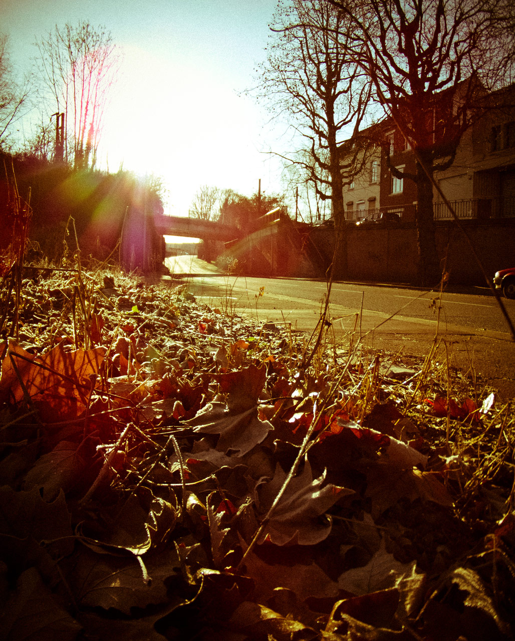 Photo: Dead Leaves in the Morning Sun