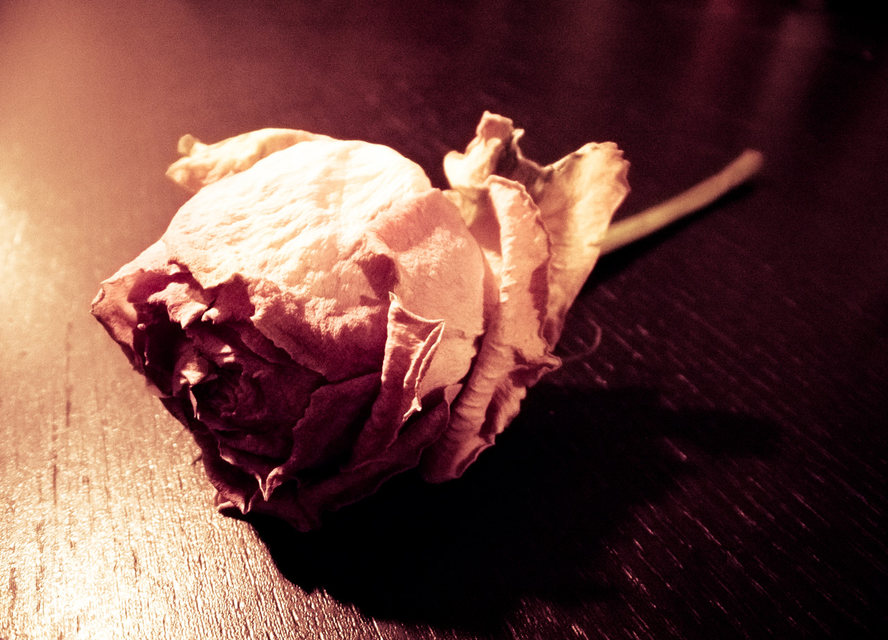 Photo: Broken Flower