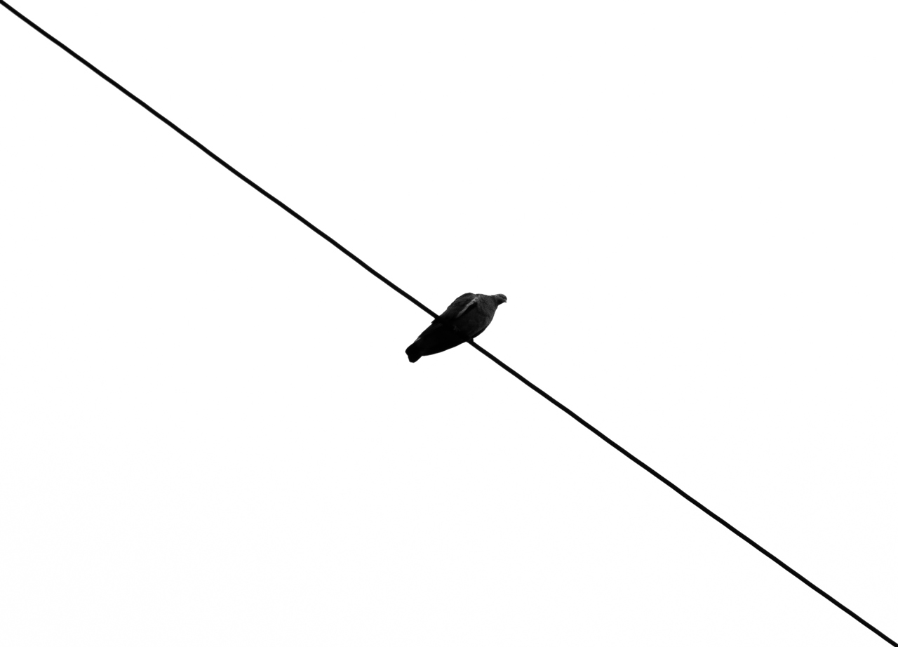 Photo: On a Tightrope